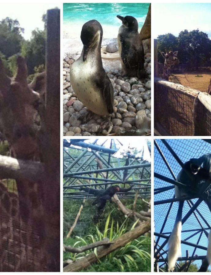 Zoo Mark II